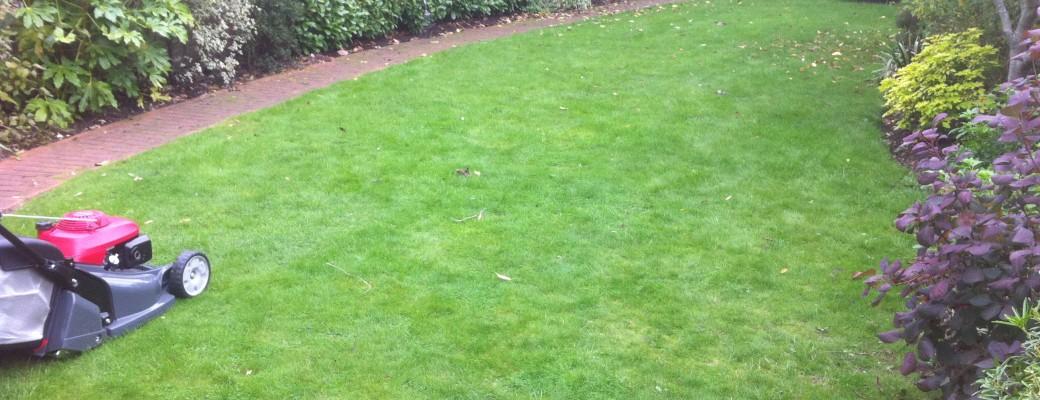 Twickenham gardening services