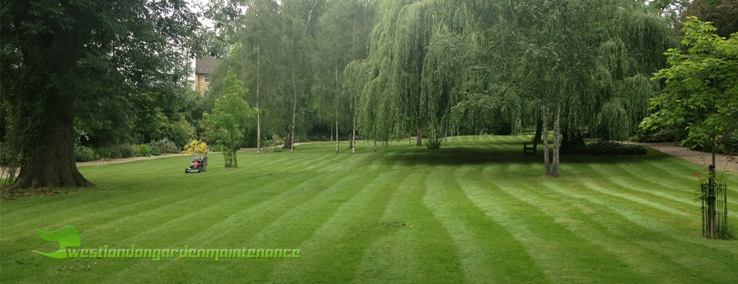 Kensington and Chelsea gardening services