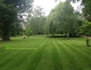 London commercial garden maintenance